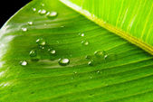Green leaves covered with waterdrops — Stock Photo