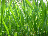 Fresh green grass on a sunny day — Stock Photo