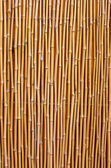 Natural bamboo texture — Stock Photo