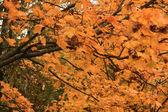 Vibrant yellow leaves — Stock Photo