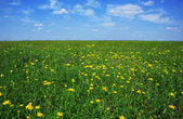 Beautiful meadow full of flowers — Stock Photo