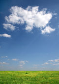 Clouds over a meadow — Stock Photo