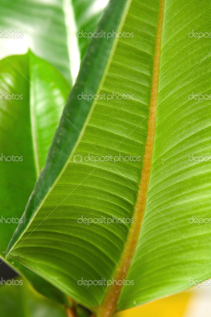 Green leaf texture macro photo — Stock Photo #5728559