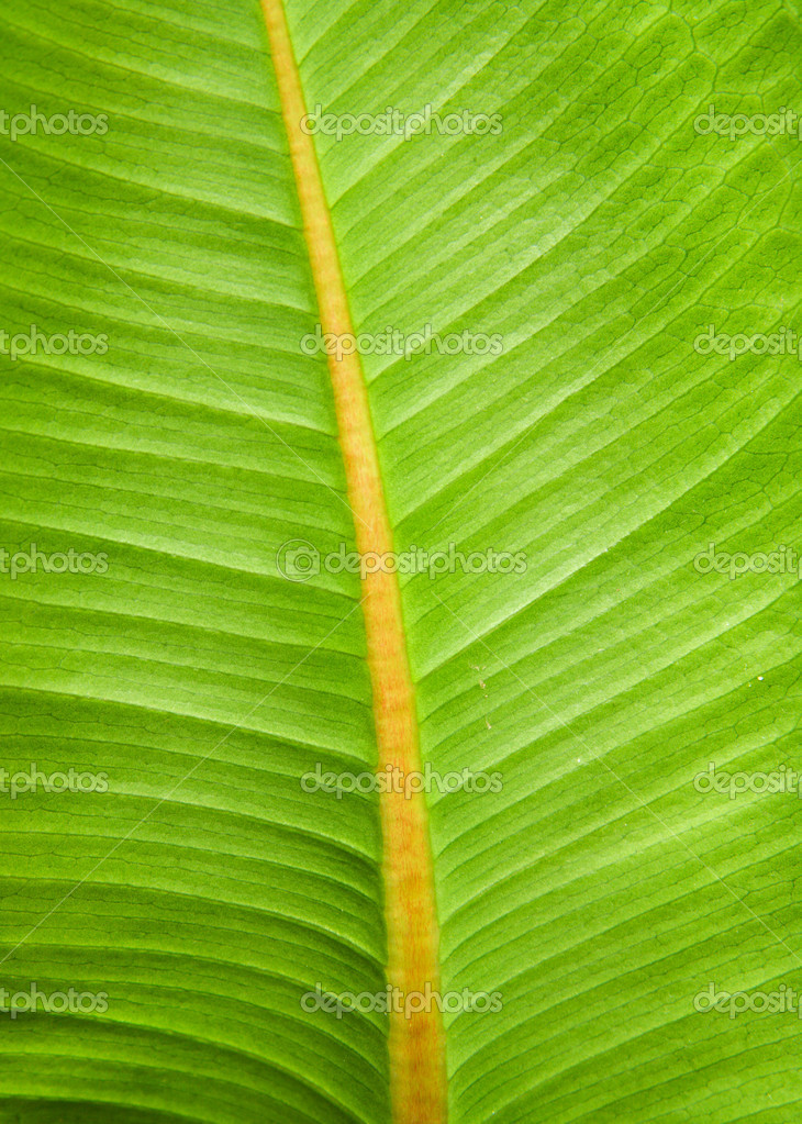 Green leaf texture macro photo — Stock Photo #5728561