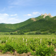 Vineyards with mountains on background - Stock Photo
