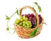 Wicker basket with grapes — Stock Photo