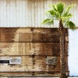 Grungy wall and a palm tree - Stock Photo