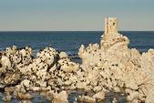 Möwen auf felsigen Strand — Stockfoto