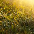 Droplet covered grass — Stock Photo #6512462