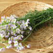 Stock Photo: Bunch of cuckoo flower in basket