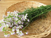 Bunch of cuckoo flower in basket — Stock Photo