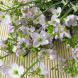Bunch of cuckoo flower — Stock Photo
