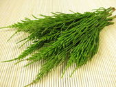 Bunch of field horsetail — Stock Photo