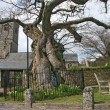 Stock Photo: Meavy Church, Dartmoor, Devon, UK.