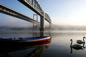 Tamar Bridges — Stock Photo
