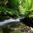 St Nectans Glen stream — Stock Photo
