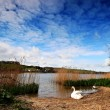 Swan at Slapton. — Stock Photo