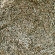 Hay texture — Stock Photo #6449624