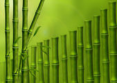 Background from the stems of bamboo — Stock Photo