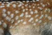 Coat of a fallow deer — Stock Photo