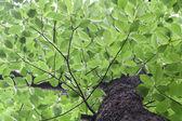 Green leaves background — Stockfoto
