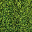 High detailed grass — Foto Stock