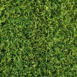 Stock Photo: High detailed grass