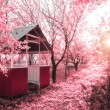 Pink spring(infrared photo) - Stock Photo