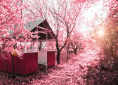 Pink spring(infrared photo) — Stock Photo