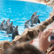 Dolphin show — Stock Photo #6581892