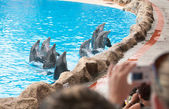Dolphin show — Stock Photo
