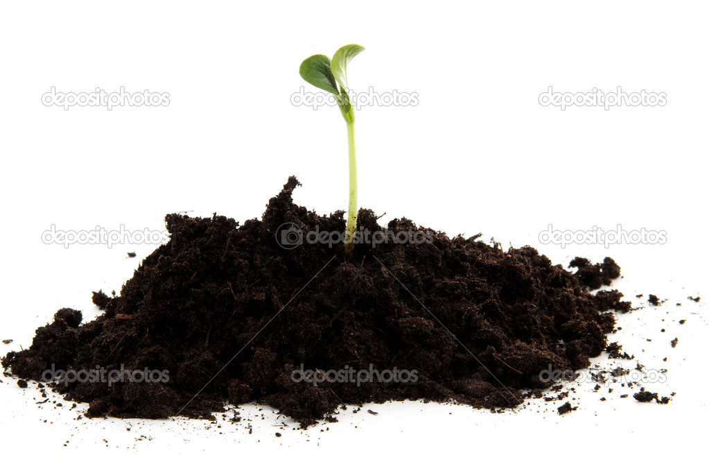Pile of black garden soil with young plant for new life for Soil young s modulus