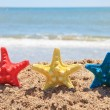 Three colorful starfish on the beach — Stock Photo