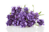 Closeup of lavender — Foto de Stock