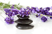 Black pebbles stones and lavender flowers — Stock Photo