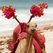 Camel on the beach — Stock Photo #6185288