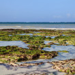 Seaweed on Danibeach in Kenya — Stock Photo #6473781