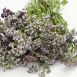 Stock Photo: Oregano with flowers
