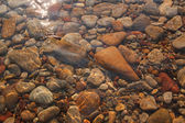Pebbles with stones are in the clear sea water — Stock Photo
