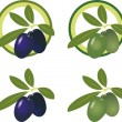 Green and black olives. Vector Icon Set - Stock Vector