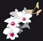 White Orchid — Stock Vector