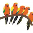 Bright Sun Conure Parrots On White — Stock Vector