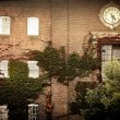Old brick building with ivy and clock — Stock Photo