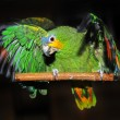 Stock Photo: Birds, Parrot, exotic birds
