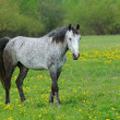Horse on a green grass — Stock fotografie