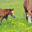 Horse on a green grass — Stock Photo