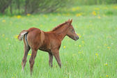 Baby of Horse — Stock Photo