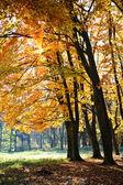 Autumn municipal park — Stock Photo