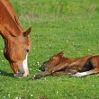 Horse with a baby on a pasture — Stock Photo