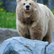 Stock Photo: Portrait of Bear